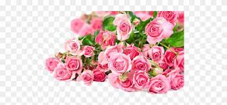 pink roses flowers bouquet png photos beautiful pink rose flower 768466