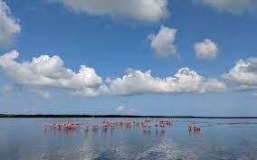 Thousands of <b>Pink Flamingos</b> and <b>Color</b>-changing Mangrove Caves ...