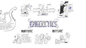 nature vs nurture debate essay nature vs nurture introduction  epigenetics nature vs nurture