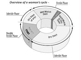 Natural Family Planning Mucus Chart Little Catholic Bubble The Natural Family Planning Post