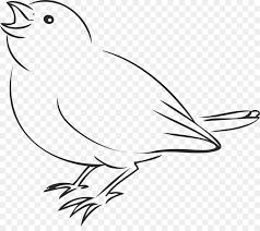 house sparrow bird drawing clip art birds line