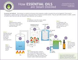 not essential. Unique Not Itu0027s Easy To Forget Amid The Many Baseless Health Claims Made For Essential  Oils That They Do Have Real Purposes Some Like Clary And Lemon Oil  Intended Not Essential N