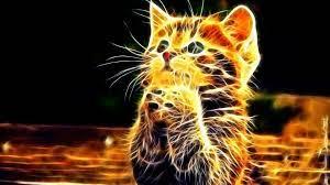 3D Photo of Cute Cat