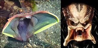 Bilderesultat for scary fish