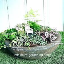 outdoor fairy garden supplies outdoor fairy garden plants for a fairy garden plants for a fairy