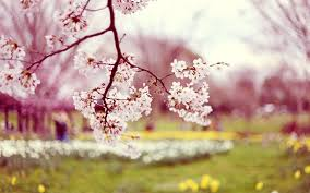 50 Spring Backgrounds free download ...