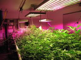 Best Cheap Led Grow Light 2015 Led Grow Light For A Farmer Seming Lighting