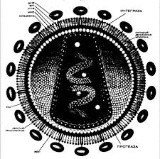 Максимальная нагрузка Вирусы и бактерии проблема СПИДа реферат скачать