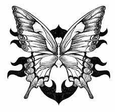 Disegni Facili Da Fare Matita Bianco Nero Farfalla Ali Spiegate