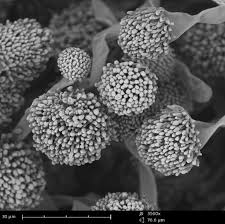 Sem Imaging The Applications And Practical Uses Of Scanning