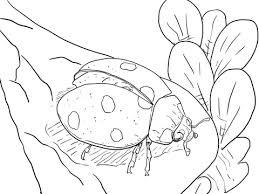 Lieveheersbeestje Klaar Om Te Vliegen Kleurplaat Gratis