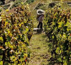 Vente De Vin En Ligne Mchapoutier Producteur Vin Biodynamie