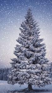 Big Christmas Tree Snow IPhone 5 Wallpaper