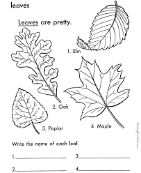 Small Picture Printable Leaf Coloring Page 009