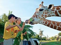 busch gardens summer camp. Perfect Busch Getting Up Close With Animals At Summer Camp On Busch Gardens N