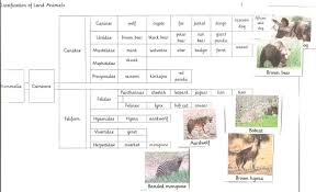 Animal Classification Chart Classify Land Animals Practical Pages