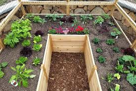 cedar raised garden bed kit cedar garden bed deer proof cedar complete raised garden bed kit