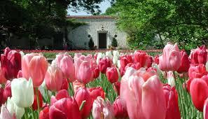 dallas arboretum and botanical garden presents dallas blooms event culturemap dallas