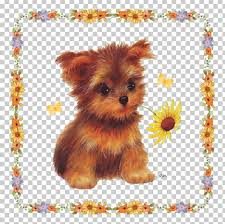 yorkshire terrier morkie puppy norfolk terrier dog breed png clipart s breed carnivoran panion dog