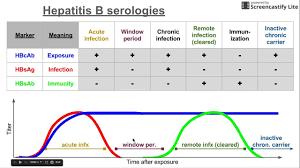 Hepatitis B Chart Hepatitis B Serologies