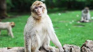 Monkey B Virus in China: First Death Reported After Beijing-Based Vet  Succumbs To The Infection
