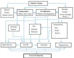 Flow Chart Of Climate Change Impacts On Forest Ecosystem