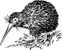Small Picture Hungry Kiwi Bird Looking for Food Coloring Pages Download
