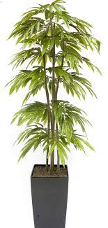 tall office plants. Modren Plants Evergreen Tall Office Plants Trees And Shrubs Handmade Artificial Pictured  Rhpinterestcom Middle Plant Can Be Used To D