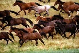 """Résultat de recherche d'images pour """"mustang chevaux"""""""