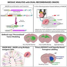 Rapid Generation Of Somatic Mouse Mosaics With Locus