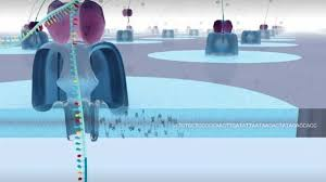 Introduction To Nanopore Sequencing Video Technology Networks