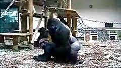 Free zoo videos on Animal porn tube