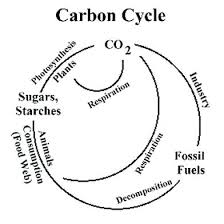 Venn Diagram Photosynthesis And Cellular Respiration Photosynthesis And Cellular Respiration Diagram Michaelhannan Co