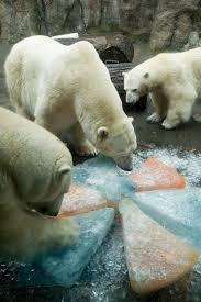 bears oregon zoo tags