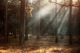 Add Light Rays In Photoshop How To Simulate Realistic Light Rays Effects In Adobe Photoshop