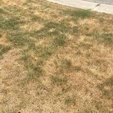 photo of trugreen lawn care dallas tx united states
