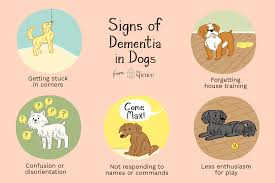 ilration of signs of dementia in dogs