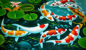 Koi Feeding Picture - HD Wallpapers