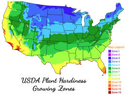 Hardiness Zone Chart Usda Plant Hardiness Zone Map For Palm Trees And Other