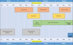 Growing Citrus Fertilizer Management Of Citrus Orchard