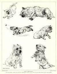 1930s Antique CAIRN TERRIER Dog Print Vere Temple Cairn Terrier Art 3207-G | Cairn terrier, Dog sketch, Dog art