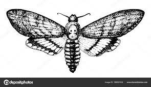 бабочка или дикие мотылек насекомое мистические энтомологического