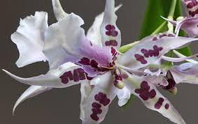 Resultado de imagen para orquideas gifs