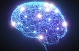 essay the brain time travel in the brain writefiction web fc com essay the brain time travel in the brain