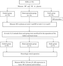Adrenergic Receptors Chart Experimental Flow Chart Shr Spontaneously Hypertensive Rat