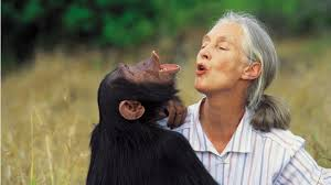 Jane Goodall Quotes Enchanting 48 Jane Goodall Quotes To Help Us Remember Koko Bookstr