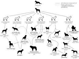 Canine Evolution Chart Dog Evolution Chart Urban Dog