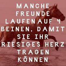 Wer Kennt Schöne Pferdesprüche Pferde Sprüche Zitat