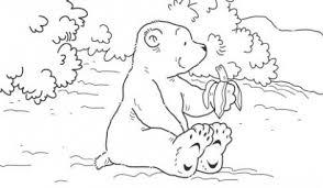 Ijsberen In Dierenpark Emmen Bennie Wolbers