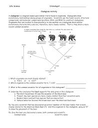 Bear Classification Chart Cladogam Activity